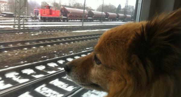Bahnfahren mit Hund: den Vierbeiner im Zug mitnehmen